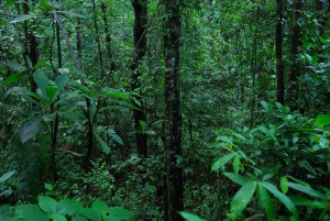 evergreen_forest