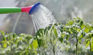 1428937446-wateringplants